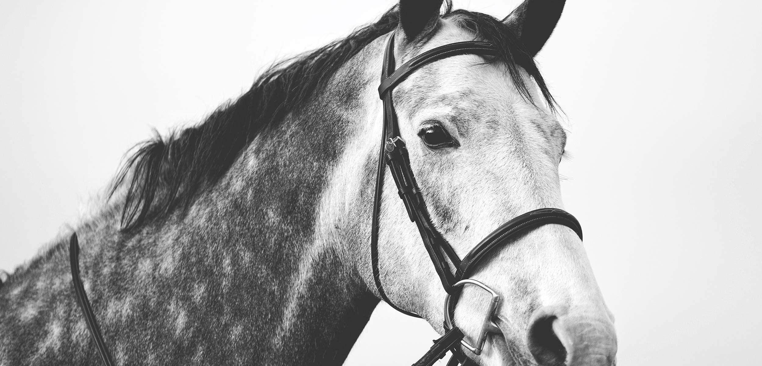 Home - Sporthorse Saddlery